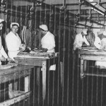 A8 Bacon Factory Workers